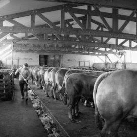 boucherie ruoms visite éleveurs